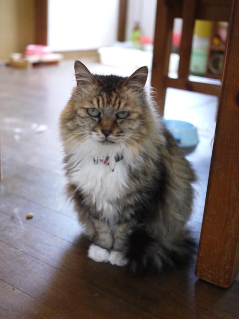 猫のお留守番 ハナちゃんホビちゃんエムくんライオンちゃんガブくんハートくん編。_a0143140_21221542.jpg