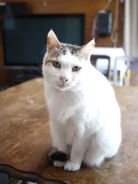 猫のお留守番 ハナちゃんホビちゃんエムくんライオンちゃんガブくんハートくん編。_a0143140_21225327.jpg