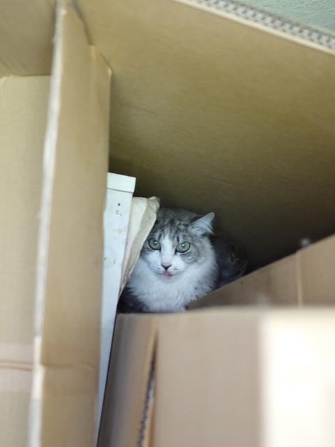 猫のお留守番 ハナちゃんホビちゃんエムくんライオンちゃんガブくんハートくん編。_a0143140_21232868.jpg