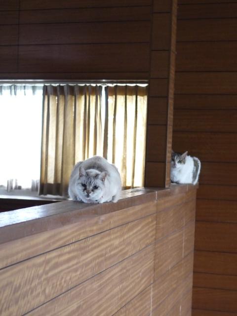 猫のお留守番 ダイヤちゃんクラブちゃんメイちゃんフーちゃん編。_a0143140_21333439.jpg