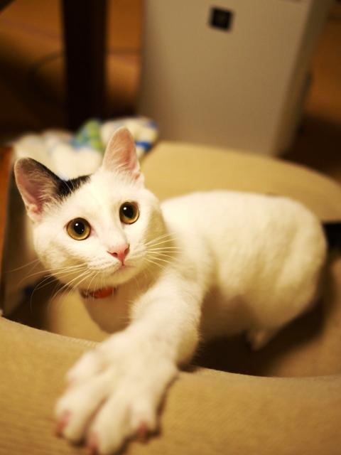 猫のお留守番 たらくん編。_a0143140_2195366.jpg