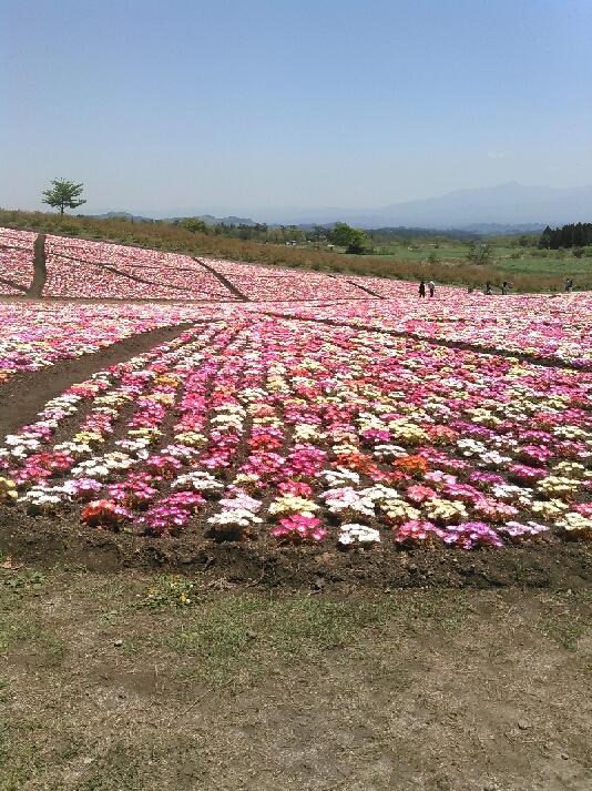 くじゅう花公園イベント情報です!_e0153852_1419212.jpg