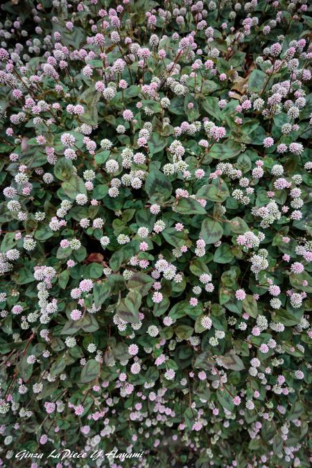 花のある風景 びっちりポリゴナム_b0133053_064573.jpg