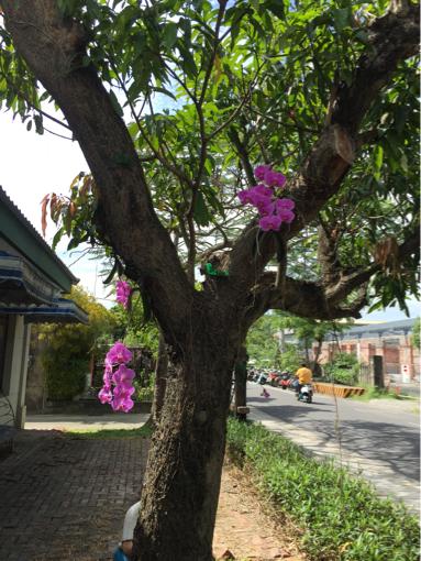 f0149057_14333831.jpg