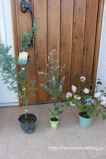 今日のリビングとお庭の新入りグリーン_d0291758_14301088.jpg