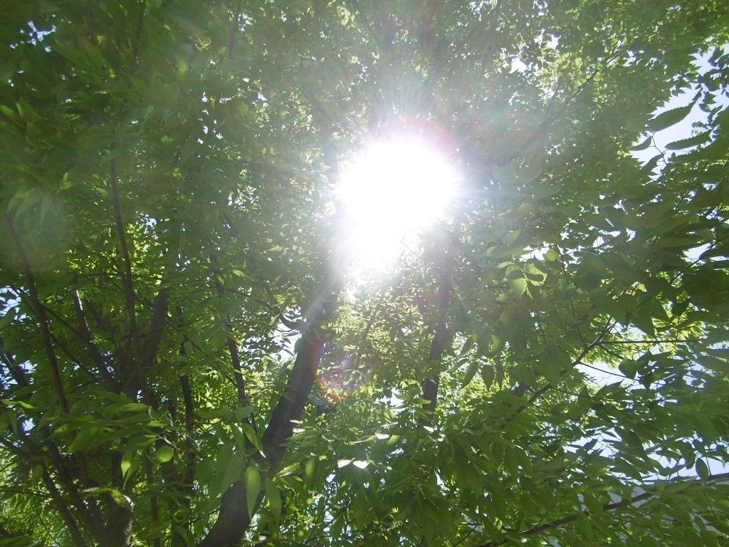 木漏れ日_f0205367_17351582.jpg