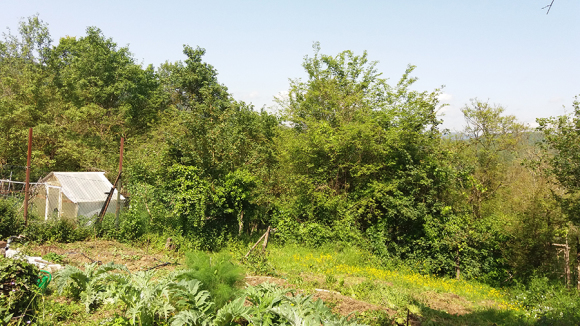 今週は畑はお休み_f0106597_02163802.jpg