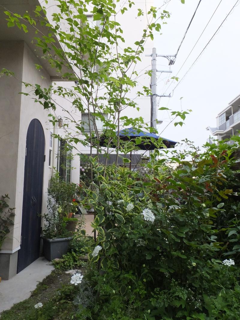 3年間の庭の記録2_f0035506_02533.jpg