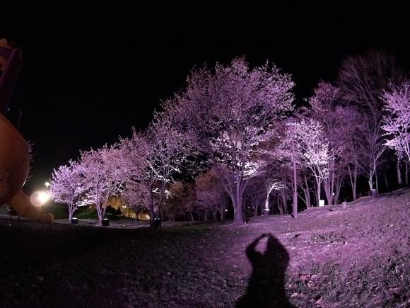 夜桜見物(^・^)_f0096216_20562242.jpg