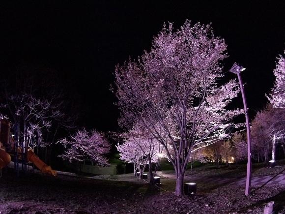 夜桜見物(^・^)_f0096216_20565397.jpg