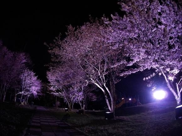 夜桜見物(^・^)_f0096216_21233.jpg