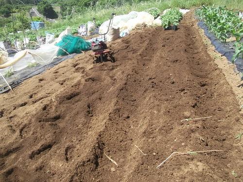 初夏ですが..秋野菜の植え付け!_b0137932_1757451.jpg