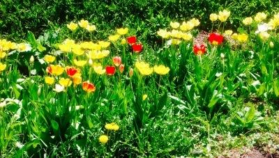 THE 春_c0350839_11033663.jpeg
