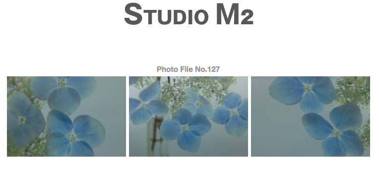 STUDIO M2 PhotoFile No.127「額紫陽花」_a0002672_14291458.jpg