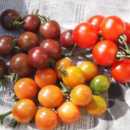 今年のトマト苗について_a0292194_2142141.jpg