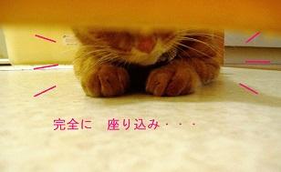 b0200310_12554040.jpg