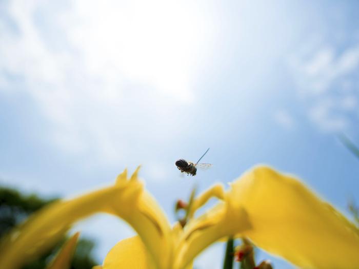 自然公園その他の昆虫たち_f0324026_1827148.jpg
