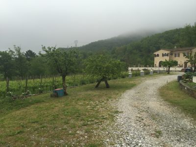 雨に濡れた薔薇_d0136540_02162720.jpg