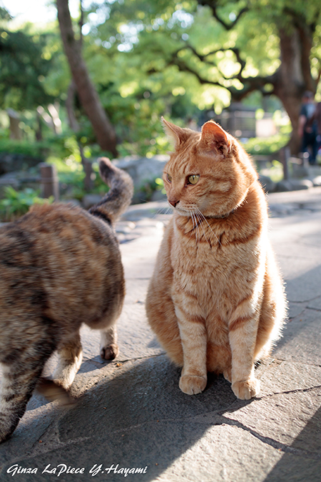 猫のいる風景 日比谷公園の子達_b0133053_0355366.jpg