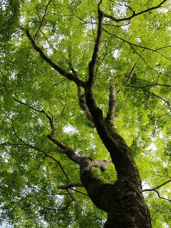 箕面自然 新緑の季節・・_d0202264_8542615.jpg