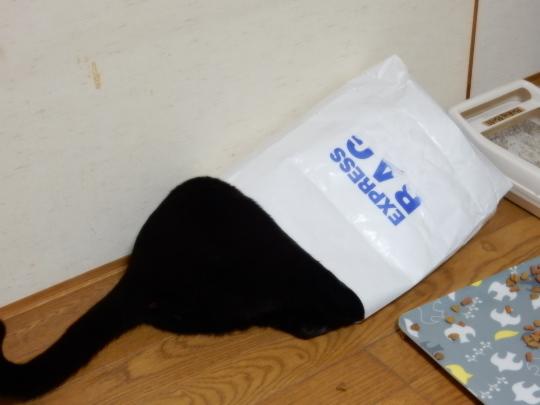 袋猫_e0355177_18492554.jpg