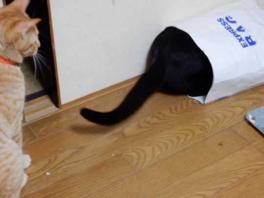 袋猫_e0355177_18494544.jpg