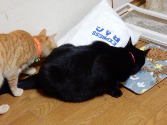 袋猫_e0355177_18510411.jpg