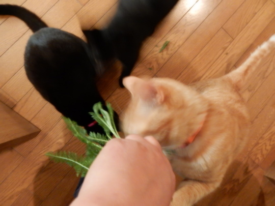 袋猫_e0355177_18512906.jpg