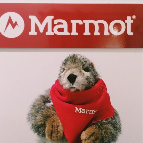 Marmot×KATO`/AAA_e0272788_18384837.jpg