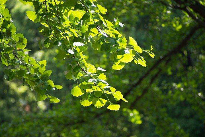 初夏の光が溢れるセントラルパーク_d0353489_21101931.jpg