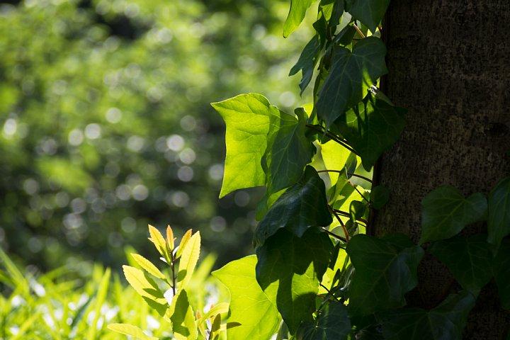 初夏の光が溢れるセントラルパーク_d0353489_21114395.jpg