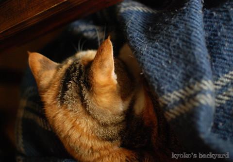 やらせ膝猫_b0253205_06523269.jpg