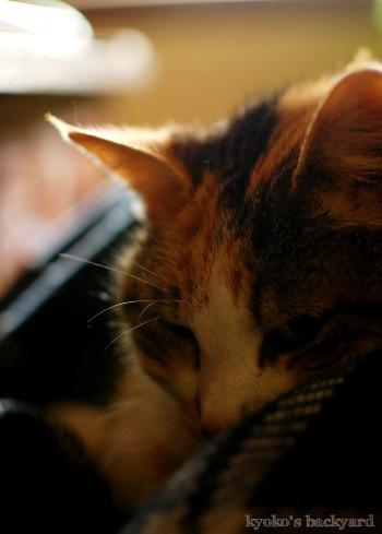 やらせ膝猫_b0253205_06525797.jpg