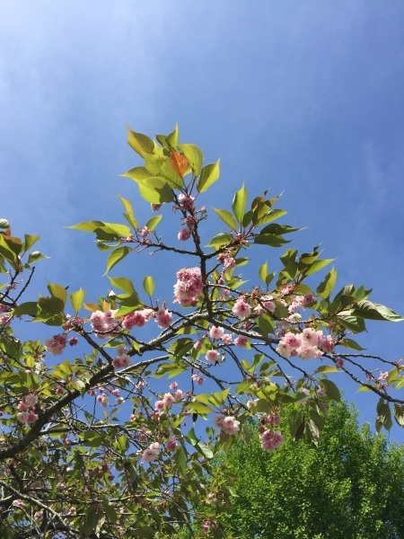 5/19(土)気仙沼へ _a0103940_23420461.jpg