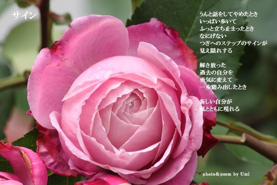 f0351844_06300029.jpg