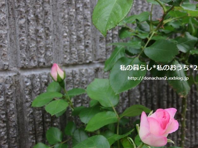 e0354456_22101363.jpg