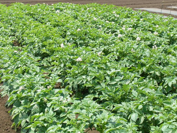 第2弾トウモロコシを蒔きました_d0225575_1583341.jpg