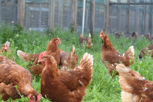 「卵と鶏銘柄についての考察 ②」 _a0120513_22525417.jpg