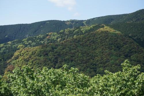 山の新緑は盛り上がる_f0055131_1022569.jpg