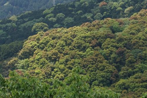 山の新緑は盛り上がる_f0055131_10231072.jpg
