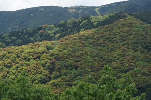 山の新緑は盛り上がる_f0055131_1023438.jpg