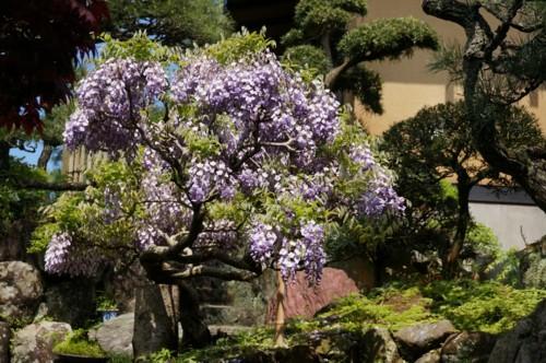 季節の旬をずらす花_f0055131_103541.jpg