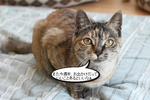 今日の保護猫さん_e0151545_21142901.jpg