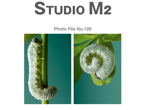 STUDIO M2 Photo File No.128 「ひらがな 『し』 と 『の』」_a0002672_1883468.jpg