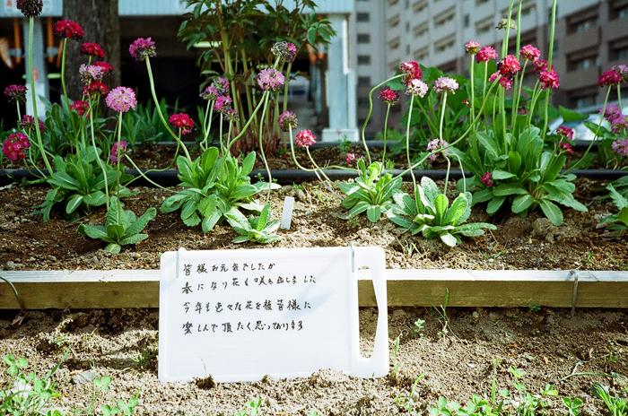 皆様お元気でしたか 花壇の手入れ_c0182775_17285688.jpg