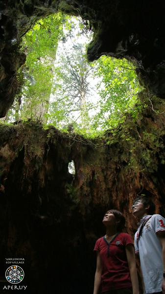 縄文杉へ、のんびりと。_f0252883_13535975.jpg