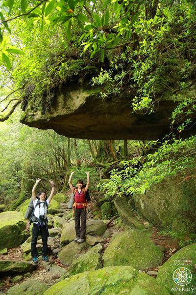 縄文杉へ、のんびりと。_f0252883_13551901.jpg