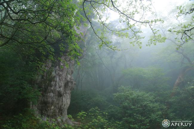 縄文杉へ、のんびりと。_f0252883_13580918.jpg