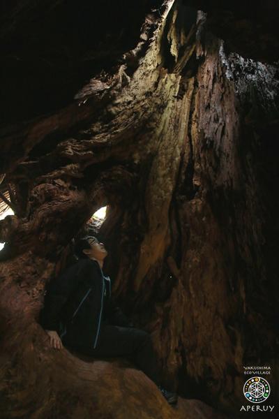 縄文杉へ、のんびりと。_f0252883_13593581.jpg