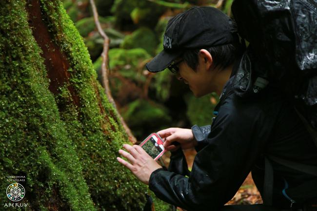縄文杉へ、のんびりと。_f0252883_13595574.jpg